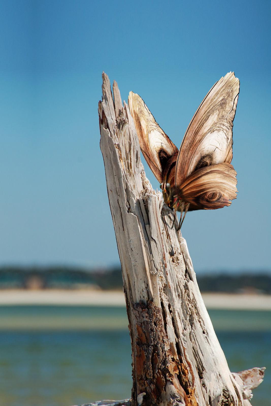 vlinder-v2